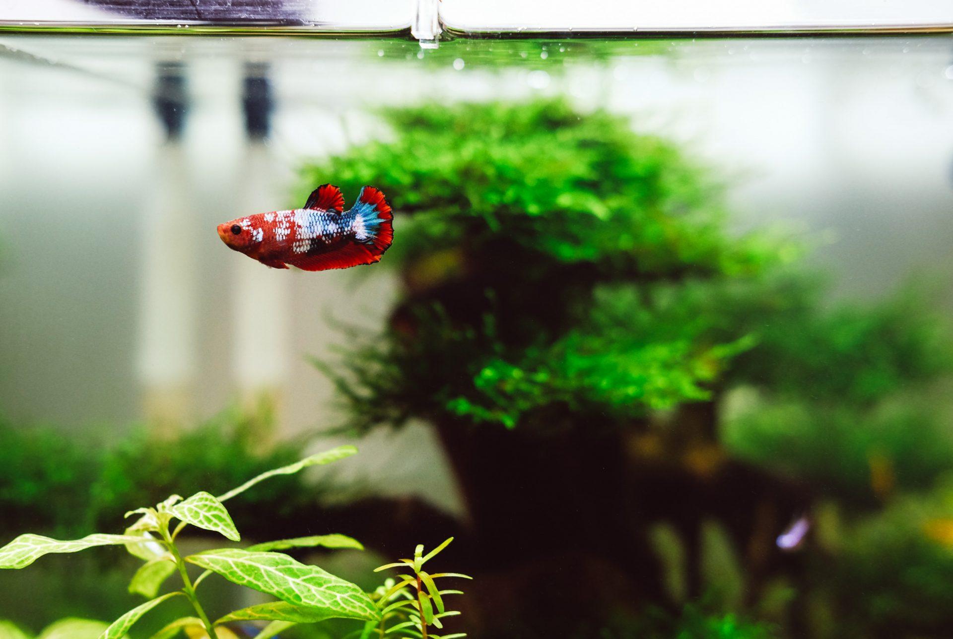 Aquarium contenant un petit poisson rouge